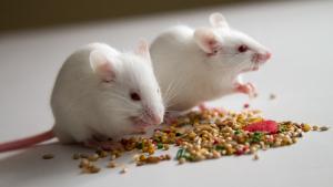 Illustration : Combien coûte une souris et où l'acheter ?