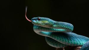 Illustration : Combien coûte un serpent et où l'acheter ?