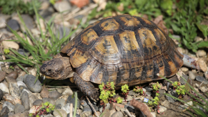 Illustration : Combien coûte une tortue et où l'acheter ?