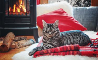 """Illustration : """"Les chaleurs chez le chat"""""""