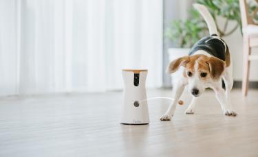 """Illustration : """"Woopets a testé la caméra connectée Furbo qui permet d'interagir avec son chien et envoyer des friandises à distance"""""""