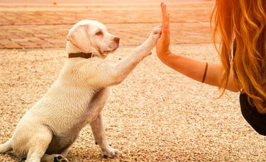 """Illustration : """"Eduquer son chien sans récompense"""""""