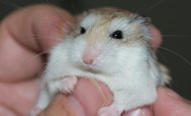 """Illustration : """"Les soins vétérinaires chez le hamster"""""""