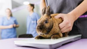 Illustration : Les soins vétérinaires chez le lapin