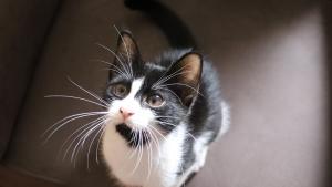 Illustration : Comment trouver un nom pour un chat mâle ?