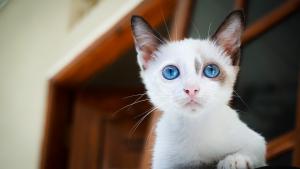 Illustration : Comment trouver un nom pour un chat femelle ?