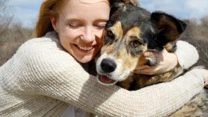 Illustration : Accueillir un chien adulte