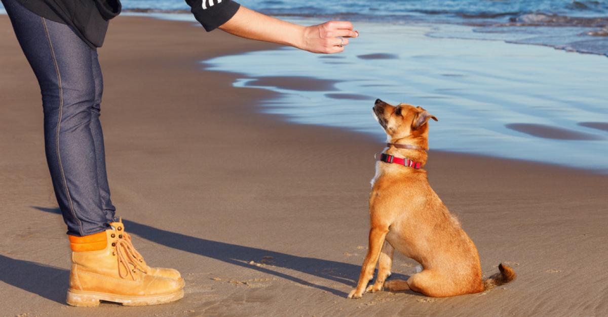 apprendre à son chien assis
