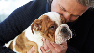 Illustration : Choisir un chien mâle