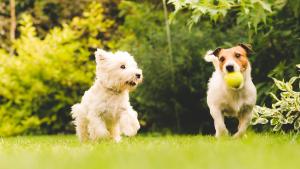 Illustration : Choisir un chien de taille moyenne