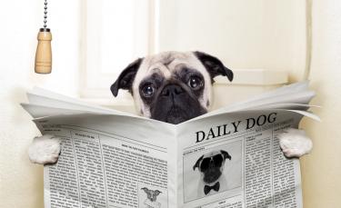 """Illustration : """"La constipation du chien"""""""