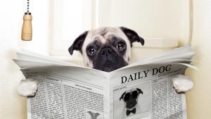 Illustration : La constipation du chien