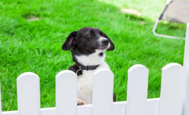 """Illustration : """"La sécurité du chien à l'extérieur"""""""