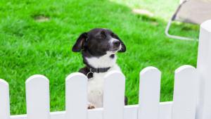 Illustration : La sécurité du chien à l'extérieur
