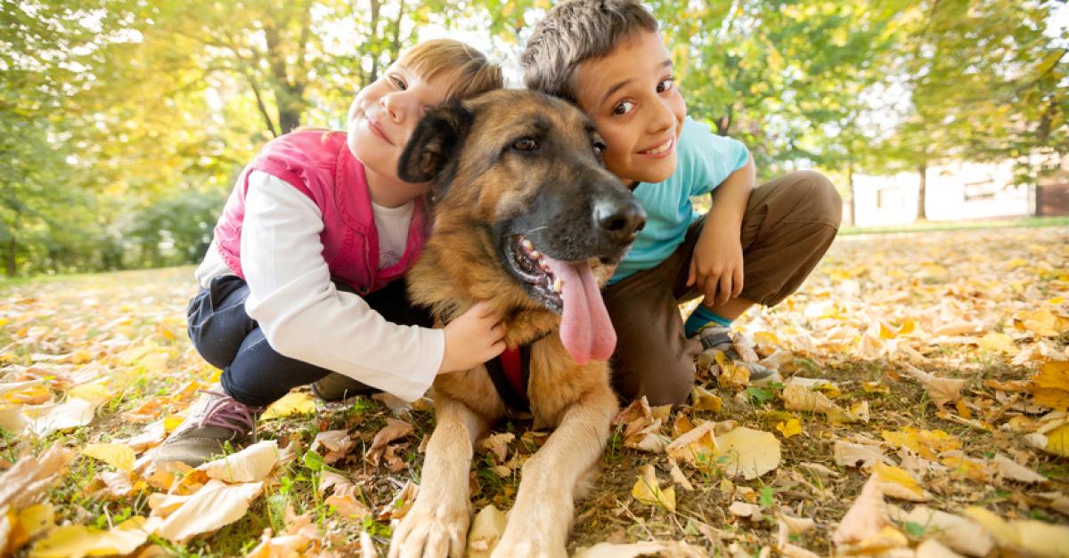 Choisir un chien pour son enfant : conseils et races prédisposées