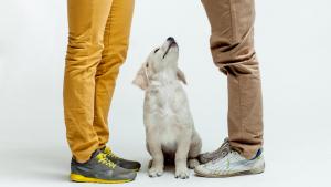 Illustration : Acheter un chien à un particulier
