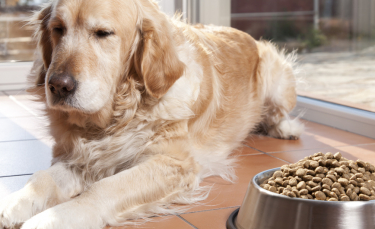 """Illustration : """"L'alimentation d'une chienne pendant sa période de gestation"""""""