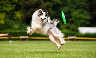 """Illustration : """"Jouer avec son chien en extérieur"""""""