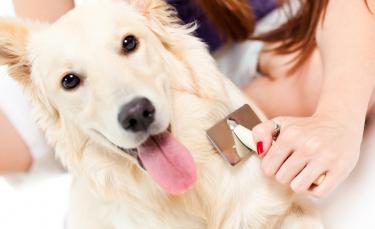 """Illustration : """"Entretenir la beauté des poils de son chien"""""""