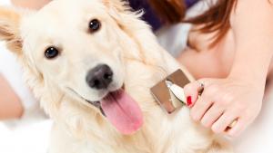 Illustration : Entretenir la beauté des poils de son chien
