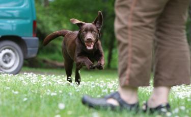 """Illustration : """"Promener son chien sans laisse"""""""