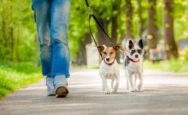 """Illustration : """"Apprendre à son chien à marcher en laisse"""""""