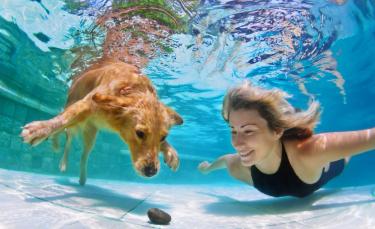 """Illustration : """"Apprendre à son chien à nager"""""""