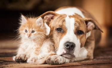 """Illustration : """"La cohabitation entre chien et chat"""""""