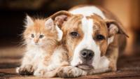 Illustration : La cohabitation entre chien et chat
