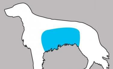 """Illustration : """"11 signes à reconnaître pour sauver votre chien !"""""""
