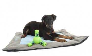"""Illustration : """"Choisir un tapis pour son chien"""""""