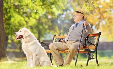 """Illustration : """"Protéger son chien du soleil"""""""
