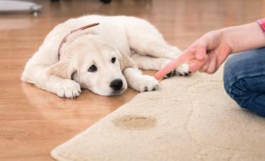 """Illustration : """"Les couches pour chien"""""""
