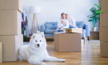 """Illustration : """"Préparer son chien au déménagement"""""""