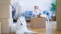 Illustration : Préparer son chien au déménagement