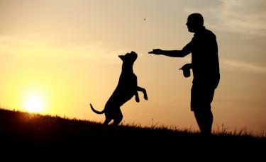 """Illustration : """"Faire face au décès de son chien"""""""