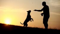 Illustration : Faire face au décès de son chien