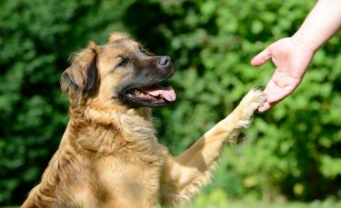 """Illustration : """"Apprendre à son chien à donner la patte"""""""