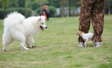 """Illustration : """"La peur des autres chiens"""""""