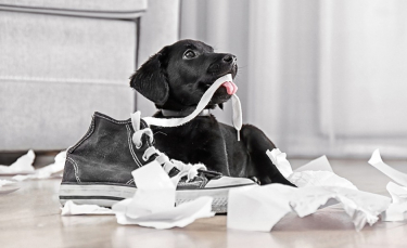 """Illustration : """"Maîtriser un chien mangeur d'objets"""""""