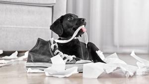 Illustration : Maîtriser un chien mangeur d'objets