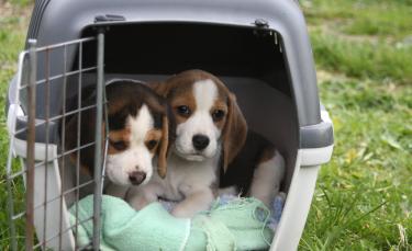 """Illustration : """"La caisse de transport pour chien"""""""