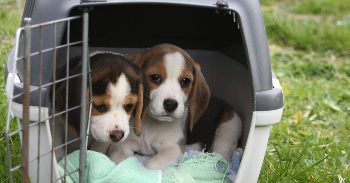 la caisse de transport pour chien choisir le mod le adapt. Black Bedroom Furniture Sets. Home Design Ideas