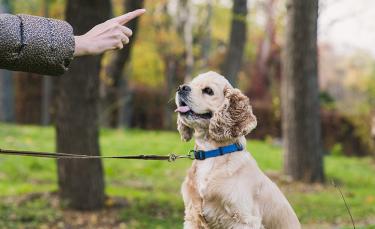 """Illustration : """"Apprendre à son chien à reculer"""""""