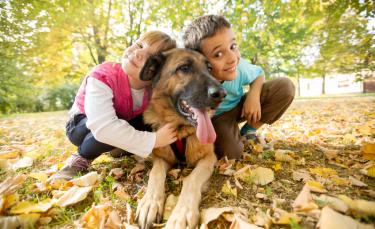 """Illustration : """"Les différentes étapes pour bien caresser un chien"""""""