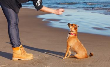 """Illustration : """"Comment faire obéir son chien ?"""""""