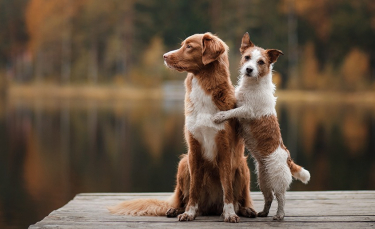 """Illustration : """"L'éducation sexuelle du chien """""""