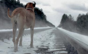 """Illustration : """"Chien perdu : que faire lorsque son chien a fugué ?"""""""