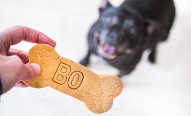 """Illustration : """"Les meilleurs noms en N pour un chien"""""""