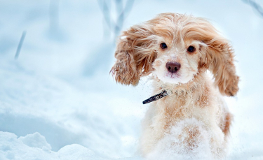 """Illustration : """"Le chien et la neige : prévenir les risques """""""